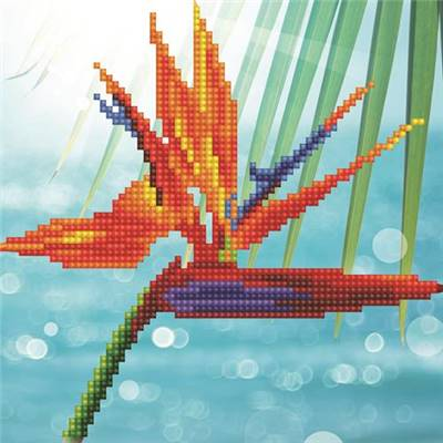 KIT DIAMOND ART DEBUTANT - BIRD OF PARADISE